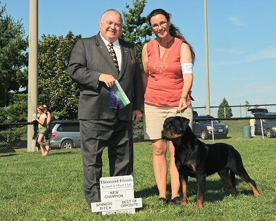Rottweiler Breeders In Florida