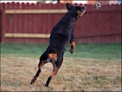 Playing Fetch