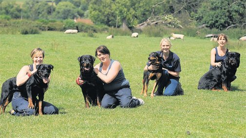 Rottweiler Obedience Training